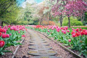 Jak zagospodarować ogród
